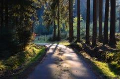 väg för skogkohmak Arkivfoto