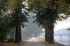 Väg för skogträd Fotografering för Bildbyråer