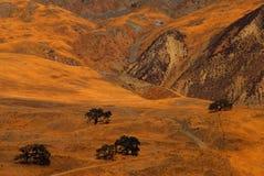 väg för svarta oaks Arkivbilder