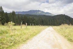 Väg i bergen Arkivfoto