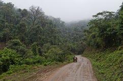 Väg i bergskogen Fotografering för Bildbyråer