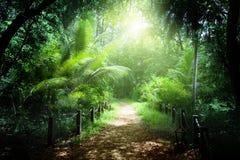Väg i den fråna Seychellerna djungeln Arkivbild
