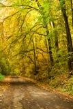 Väg i den höstliga skogen Royaltyfri Bild