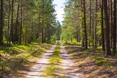 Väg i den soliga dagen för skog A i en grön skogskugga av träd på vägen Royaltyfria Bilder