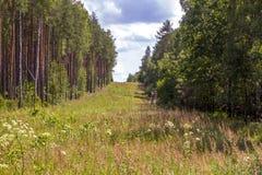 Väg i den soliga dagen för skog A i en grön skogskugga av träd på vägen Arkivfoto