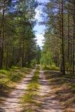 Väg i den soliga dagen för skog A i en grön skogskugga av träd på vägen Royaltyfri Bild