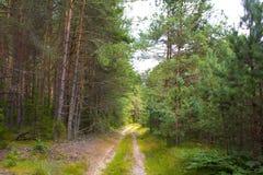 Väg i den soliga dagen för skog A i en grön skogskugga av träd på vägen Arkivbilder