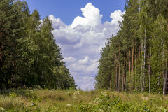 Väg i den soliga dagen för skog A i en grön skogskugga av träd på vägen Sommar Royaltyfri Foto