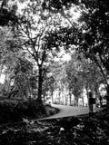 Väg i (den svartvita) skogen, Royaltyfria Foton