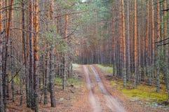 Väg i den täta pinjeskogen Arkivfoto