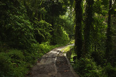 Väg i den tropiska skogen Arkivbilder