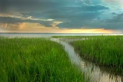 Väg i det gröna gräset till sjön Arkivbilder