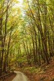 Väg i det höstligt på skogen Arkivfoton