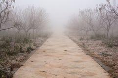 Väg i dimma Fotografering för Bildbyråer