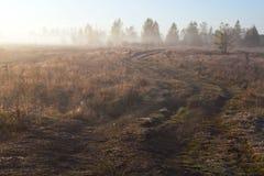 Väg i dimman Arkivbilder