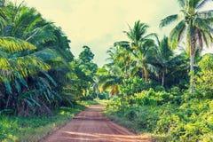 Väg i djungel Royaltyfri Fotografi