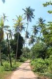 Väg i djungeln royaltyfria bilder
