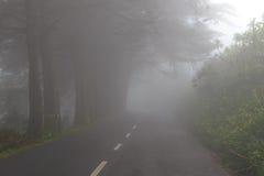 Väg i en dimma i ett moln i bergen av madeiraön, Portugal Royaltyfri Foto