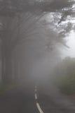 Väg i en dimma i ett moln i bergen av madeiraön, Portugal Royaltyfri Bild