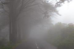Väg i en dimma i ett moln i bergen av madeiraön, Portugal Arkivfoton
