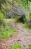 Väg i en färgrik skog för höst Arkivfoton