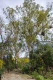 Väg i en färgrik skog för höst Royaltyfri Foto