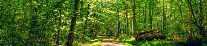 Väg i en idyllisk skog Royaltyfria Foton