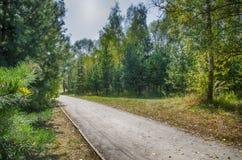 Väg i en skog Royaltyfria Foton