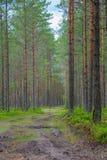 Väg i en skog arkivfoto
