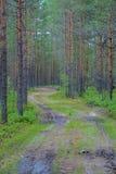 Väg i en skog arkivfoton