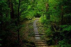 Väg i en skog Royaltyfri Fotografi