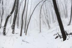 Väg i en snöig vinterskog för xmas Royaltyfria Bilder
