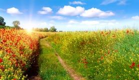 Väg i fält och blå himmel med moln Arkivfoton
