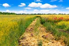 Väg i fält och blå himmel med moln Arkivfoto