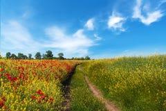 Väg i fält och blå himmel med moln Arkivbild