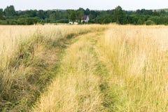 Väg i fältet som leder in i avståndet, vetefält, dålig väg arkivfoto