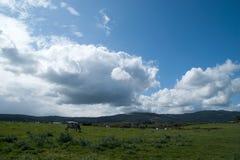 väg i Galicia Arkivfoto