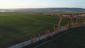 Väg i gröna fält på solnedgången stock video