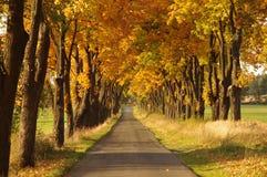 Väg i hösten. Fotografering för Bildbyråer