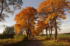 Väg i hösten. Arkivbild