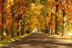 Väg i hösten. Royaltyfria Bilder