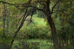 Väg in i hösten Arkivfoto