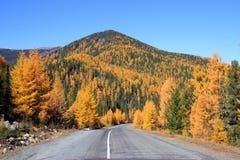 Väg i hösten i de västra Sayan bergen Arkivbild