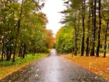 Väg i hösten på en regnig dag arkivfoton