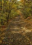 Väg i höstskogen Royaltyfria Bilder