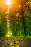 Väg i höstskogen Arkivfoton