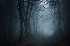 Väg i mörk skog med dimma på natten arkivbild