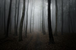 Väg i mörka trän med dimma Arkivbilder