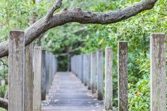 Väg i mangroveskog Arkivfoto