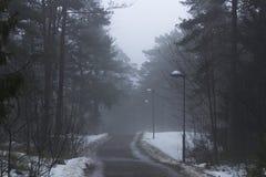 Väg i mitt av en skog, med gataljus Dimmigt lynnigt, morgon Royaltyfria Bilder